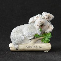 หมีโคอาล่า ออสเตรเลีย, Koala Australia