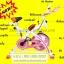 จักรยานออกกําลังกาย ระบบสายพาน Spin Bike แบบมีโช้ค รุ่น 880 สีชมพูหวาน น่ารักมากๆ สวยทนทาน รับประกัน 1 ปี thumbnail 2