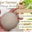 ฟองน้ำล้างหน้า ฟองน้ำขัดหน้า ฟองน้ำใยบุก สำหรับทุกสภาพผิว (สีขาวนวล) thumbnail 1