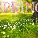 หัวน้ำหอม Spring blossom 003730