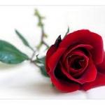หัวน้ำหอมกลิ่น กุหลาบ Rose red 002394