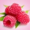 **หัวน้ำหอม Fresh Raspberry หวาน 000164