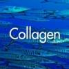 collagen สารสกัดจากปลาทะเล 30g**