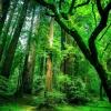 หัวน้ำหอม Rain forest 003537
