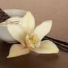 หัวน้ำหอม warm vanila (M) 001065