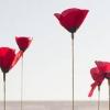 หัวน้ำหอม flower inspriration (kenzo)003828