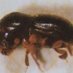 การกำจัดแมลง มอด เรือด และปลวกในบ้าน